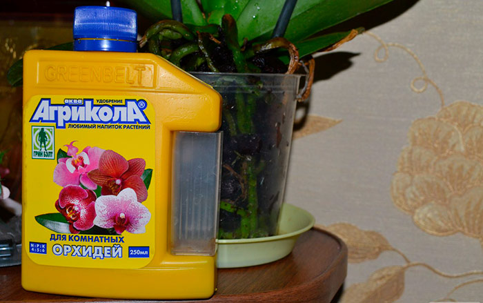 Удобрения для домашних цветов своими руками 70